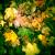 листья #1